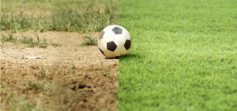 Artificial Grass Idea 1