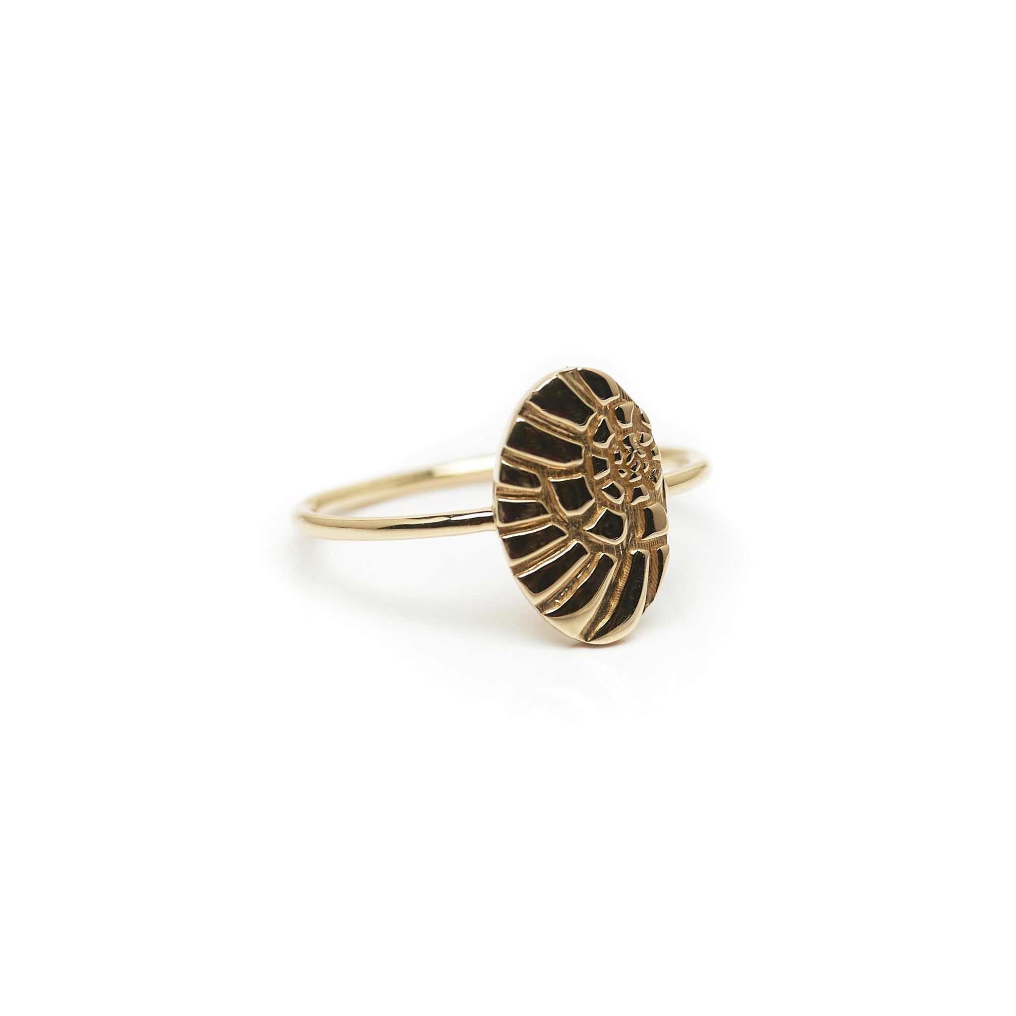 Minimalist solid 14k gold Nautilus statement ring. Every day fine jewelry
