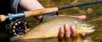 fly fishing for trout @ iwantdirect.co.uk