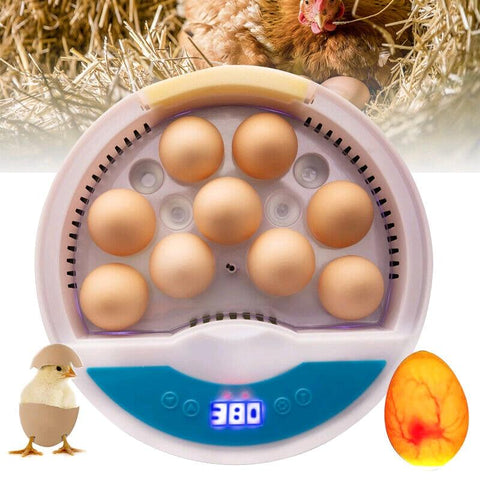 Egg Incubator Automatic Temperature Control Farm Hatchery Incubator Brooder Chicken Duck Bird Quail Brooder - I want direct