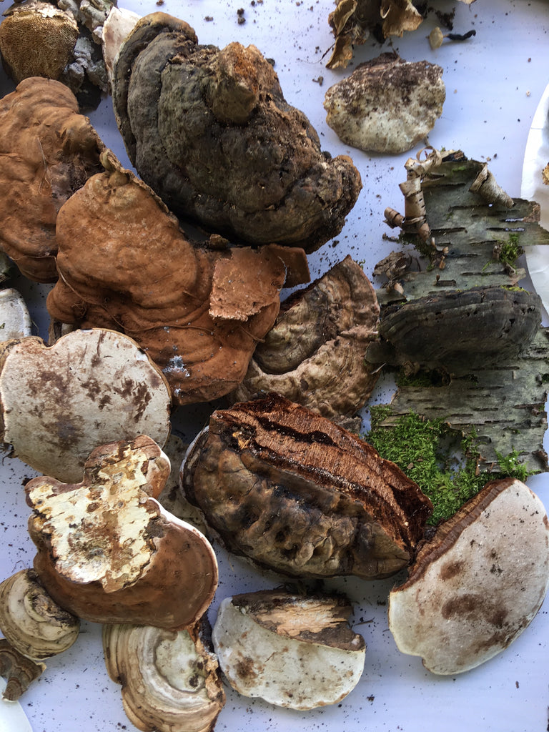 Wild foraged mushrooms at Mother Earth Fair