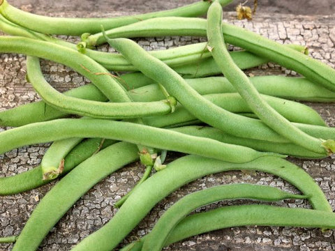 Beans 'Blue Lake Bush'