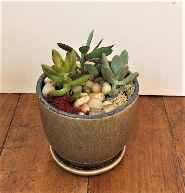 Succulent - Glazed Neutral Pot with Saucer