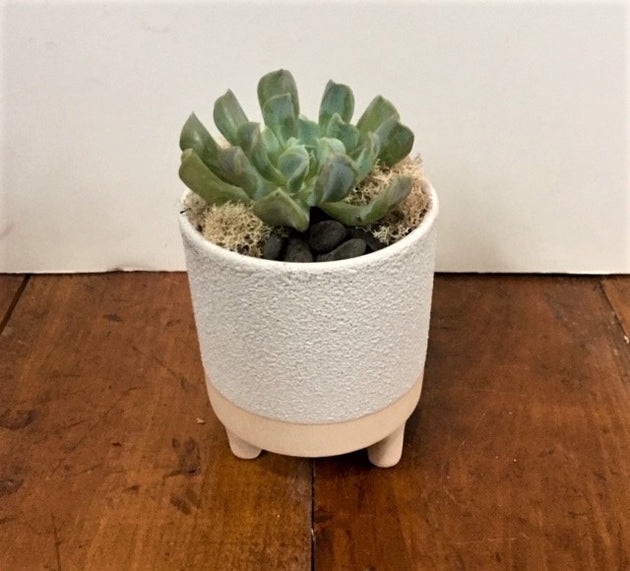 Succulent - White Footed Pot
