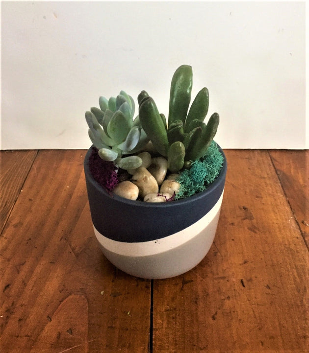 Succulent - Dark Blue Swirl Container