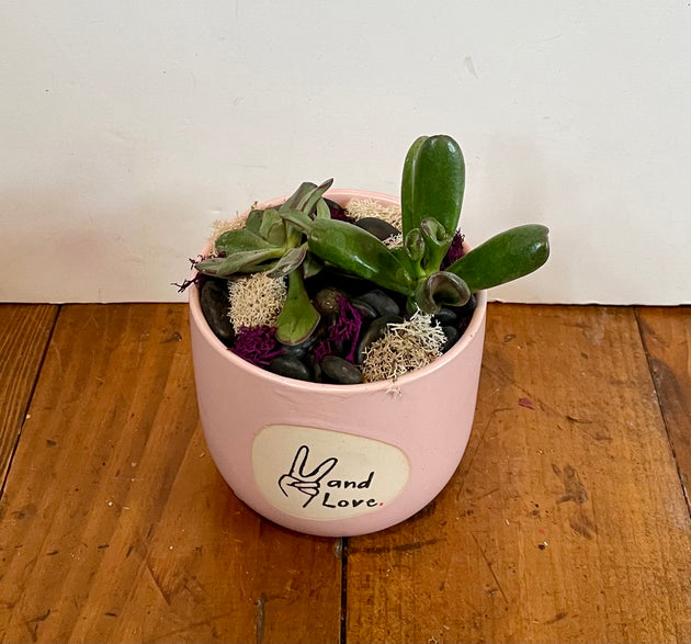Succulent - Peace & Love Container