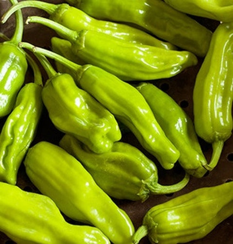 Pepper 'Greek Pepperoncini'
