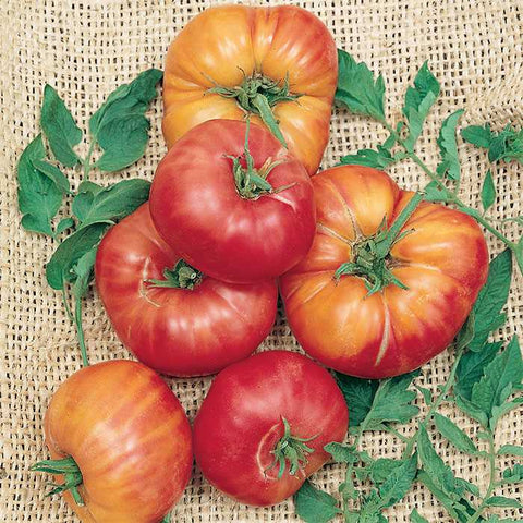 Tomato 'German Johnson Pink'