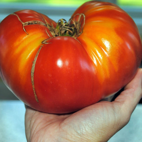 Tomato 'Mortgage Lifter'