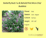 Butterfly Bush, Pink Micro Chip