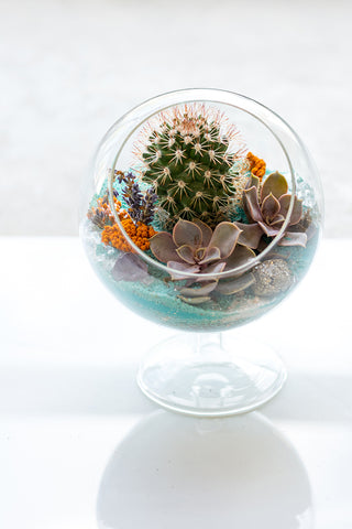 Glass Orb Succulent Arrangement