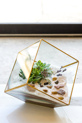 Glass Geo Succulent Arrangement