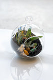 Orb Hanging Succulent Arrangement
