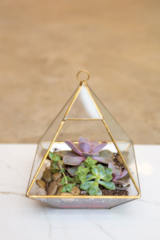 Glass Pyramid Succulent Arrangement