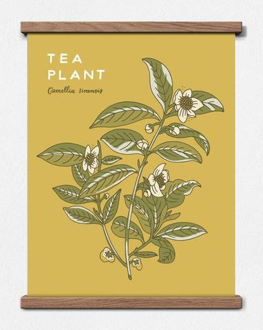 TEA PLANT 11X14 BOTANICAL PRINT