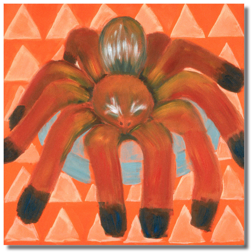 Tajo the Tarantula  18 x 18 Gallery Wrapped Canvas
