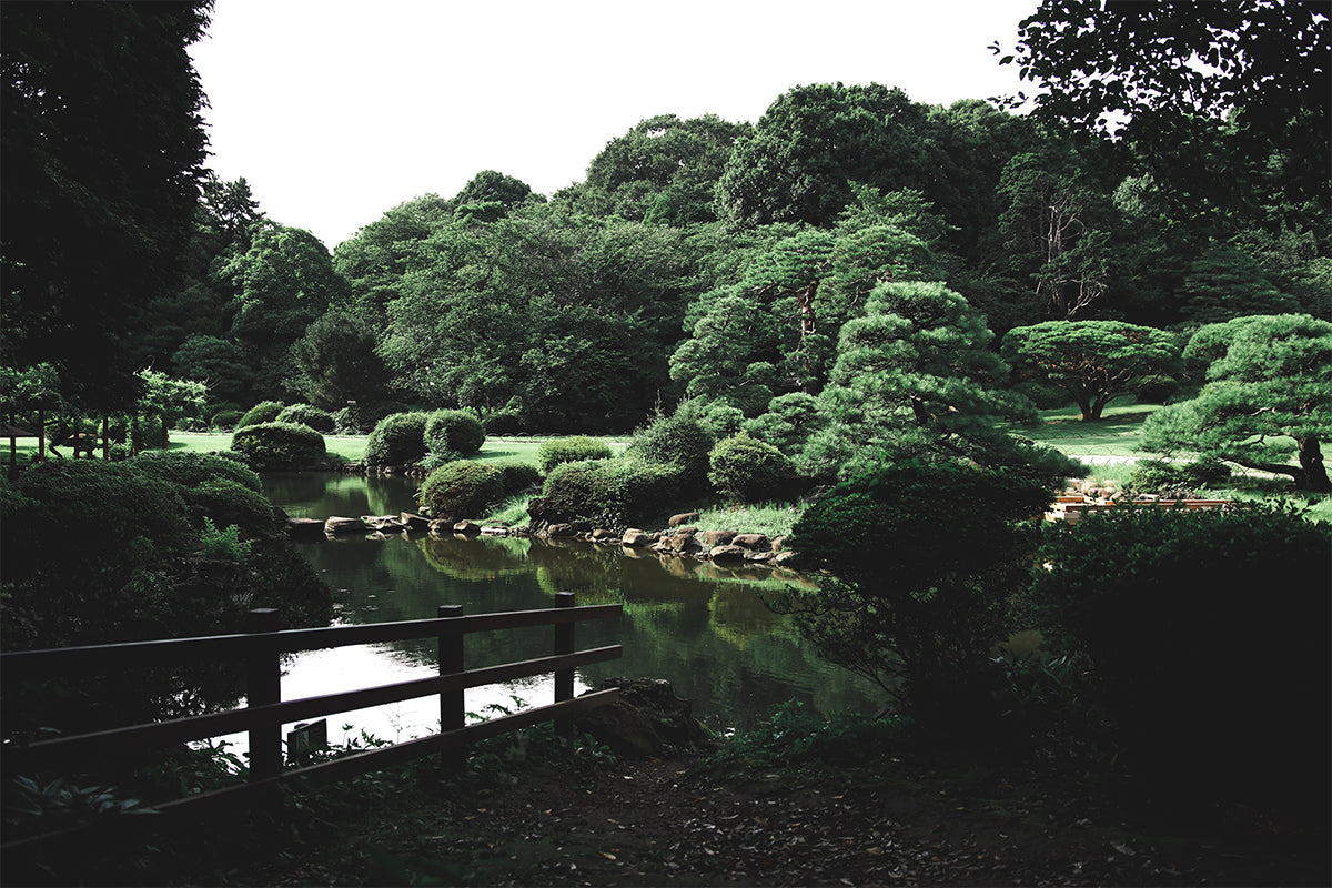 Japanese garden with path winding beside a pond