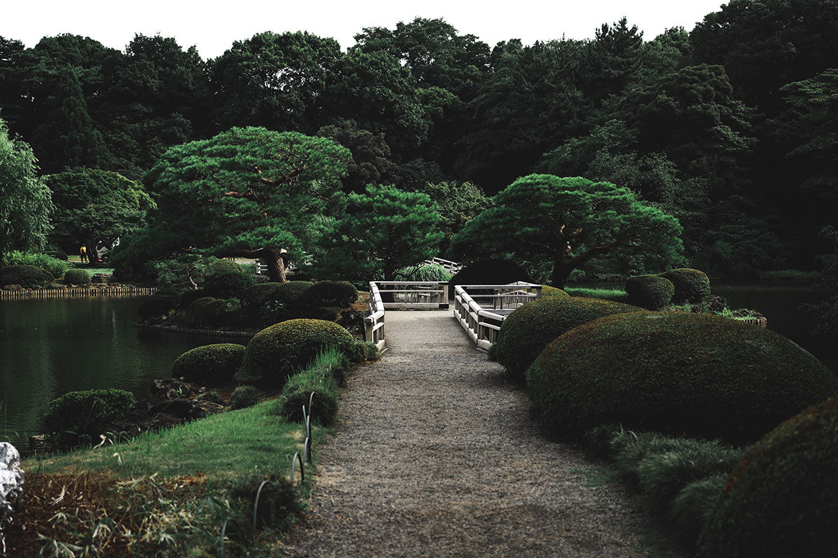 Japanese garden with central stone path