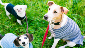 Wool Dog Sweater Care Instructions
