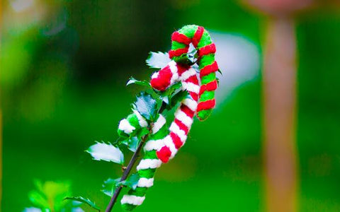 Black Friday Gifts- Candy Cane Cat Toys