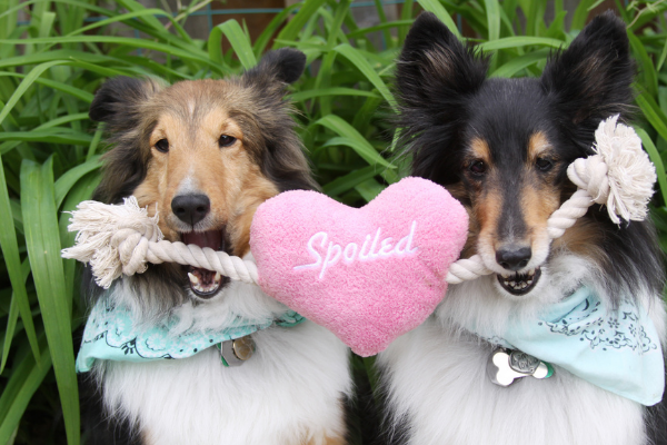 Love Your Pet Day- Sugarboy's Fiber Creations