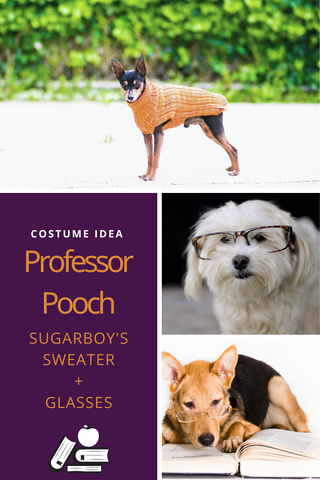 Sugarboy's_pet ideas_pet holiday _sweater weather
