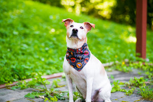 Dog Bandanna Halloween Saucers on Spider Webs