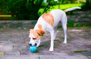 Fetch1.5!  Alpaca Dog Ball in Cool Aqua