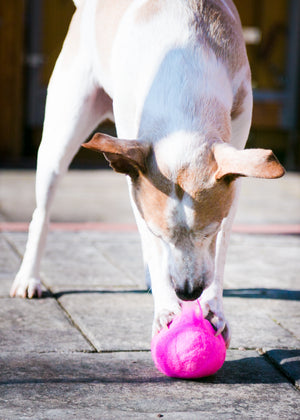 Fetch4.0!  Alpaca Dog Ball in Highlighter Pink