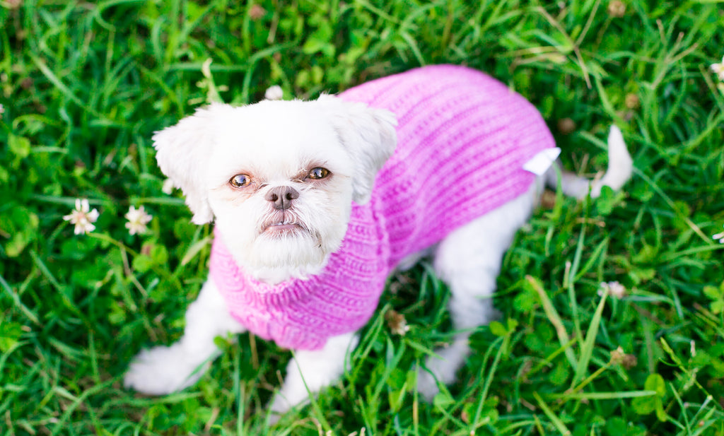 Cat & Dog Pet Sweaters in Peony