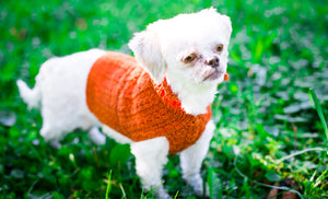 Cat & Dog Pet Sweaters in Pumpkin