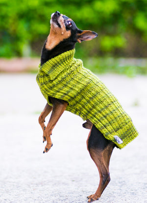 Cat & Dog Pet Sweaters in Ascot