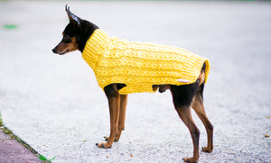 Cat & Dog Pet Sweaters in Lemon Curd