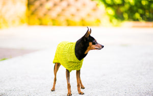 Cat & Dog Pet Sweaters in Pistachio