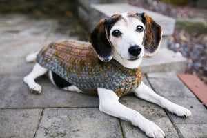 Cat & Dog Pet Sweaters in Flushing