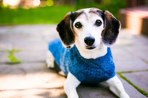 Cat & Dog Pet Sweaters in Naperville