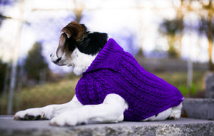 Cat & Dog Pet Sweaters in Perky