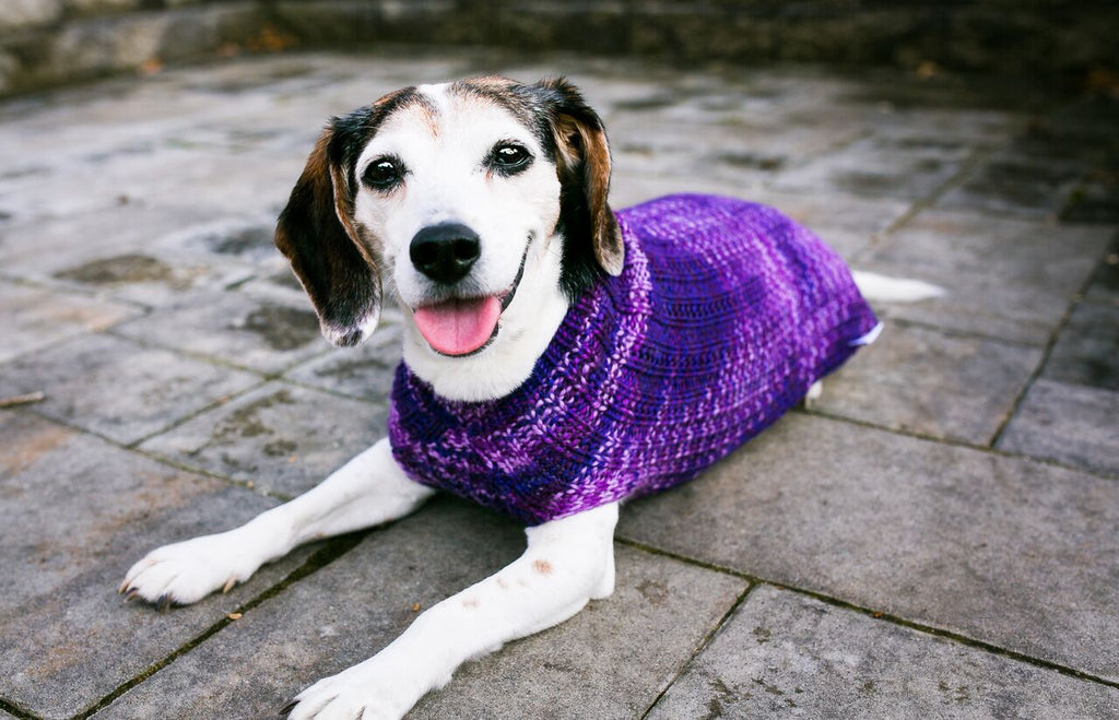 Cat & Dog Pet Sweaters in Purple Club