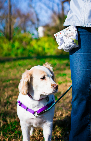 Fun Premium Treat and Pickup Bags Carry Pouch Food Safe Waterproof Lining Choice of Clasps Hipsta Dawg Hipster Dog