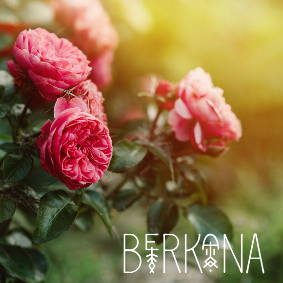 Runes Collection: BERKANA