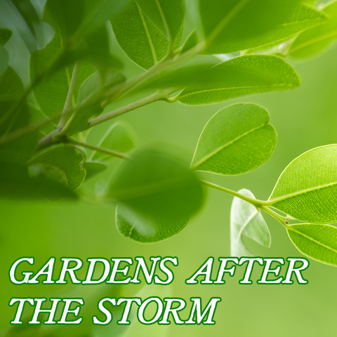 Favorites Collection: GARDENS AFTER THE STORM