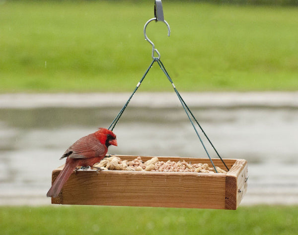Audubon 3-in-1 Platform Feeder