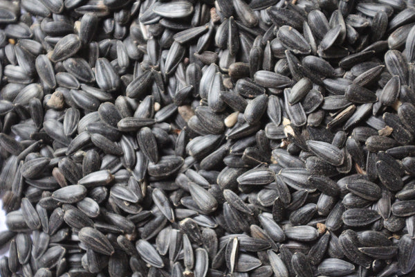 black oil sunflower seeds fruit amp veggie recipe feathered friends of santa fe 29163