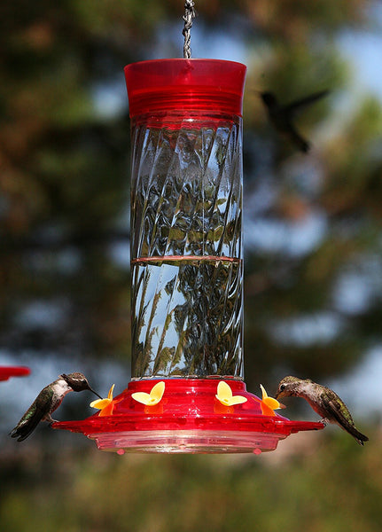 More Birds Diamond Glass Hummingbird Feeder - 30 oz.