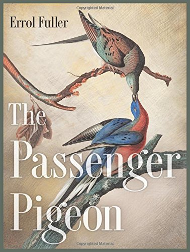 The Passenger Pigeon by Errol Fuller