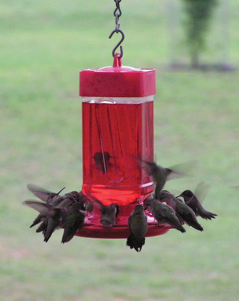 32 Ounce Wide-Mouth Hummingbird Feeder - Feathered Friends of Santa Fe (www.ffofsf.com)