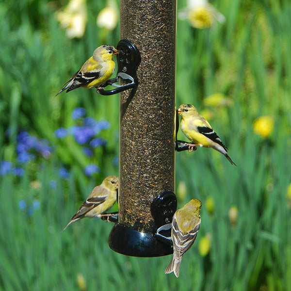 Droll Yankee - Onyx Clever Clean Finch Nyjer Feeder 24 in.