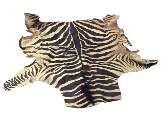 4 Creative Ways to Repurpose an Old Zebra Skin Rug