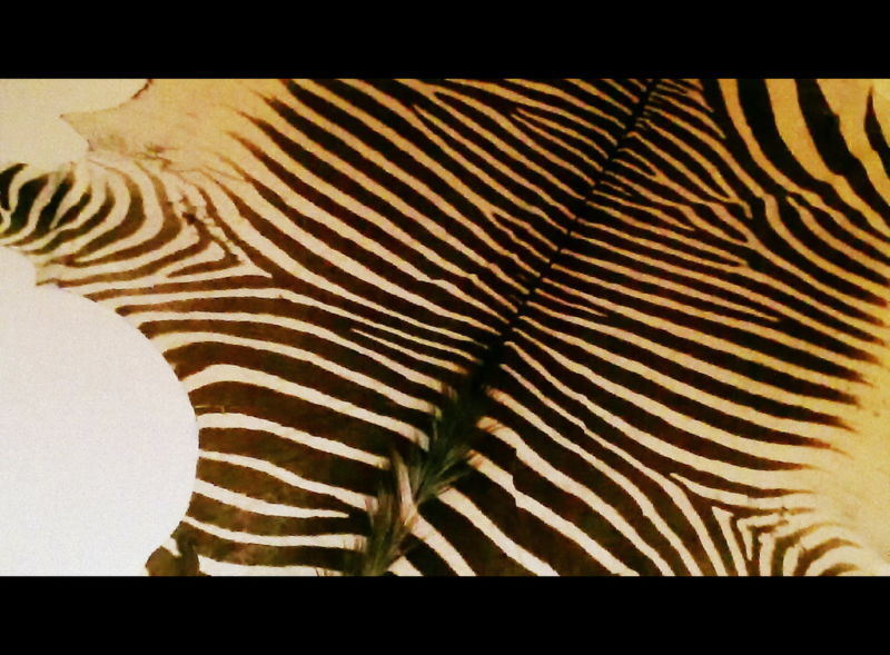 How to Select a Zebra Skin Hide