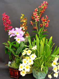 The Secret of growing orchid plants